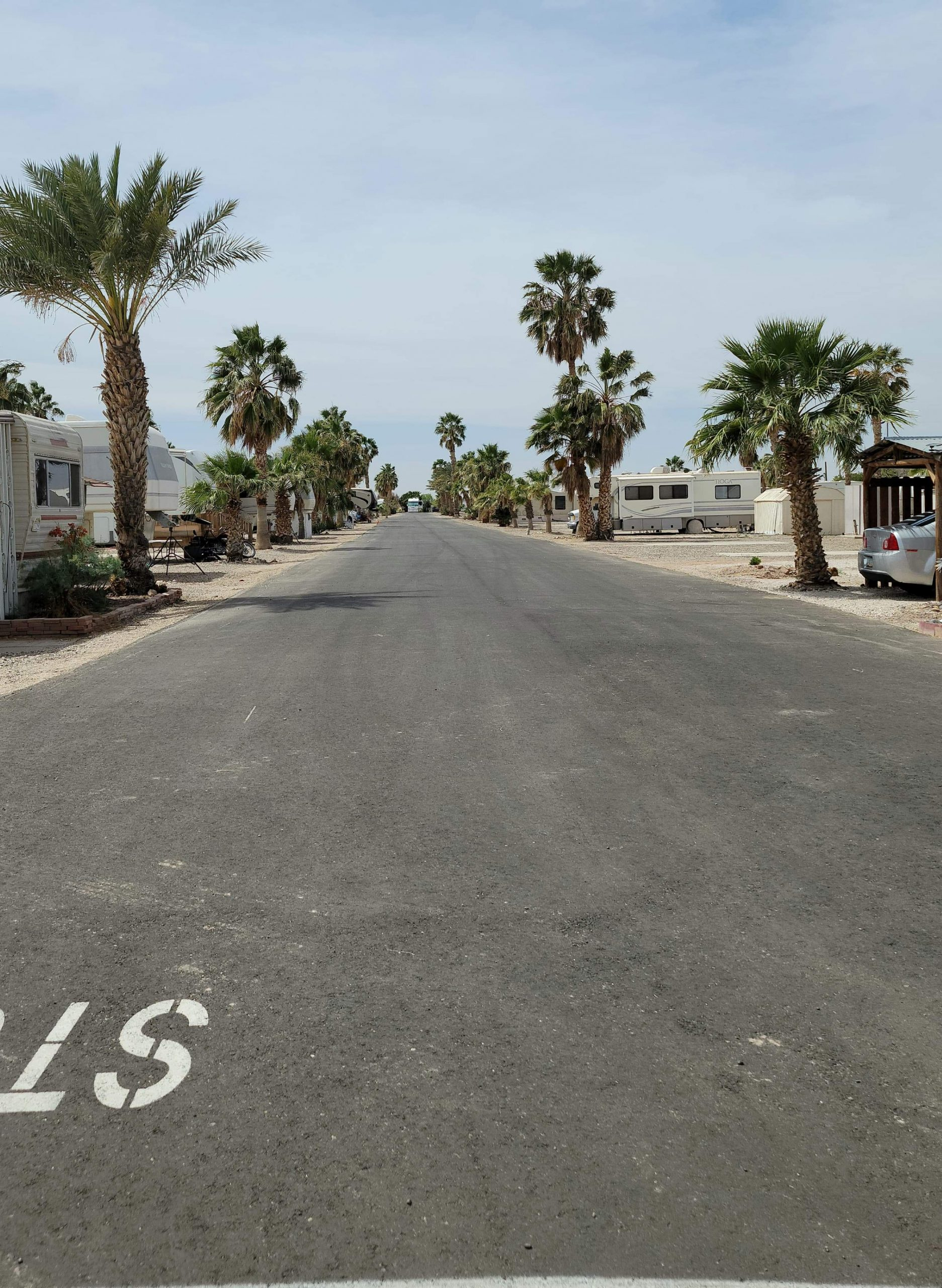 Road with units on left and ride side along with palm trees on the edge of the road.